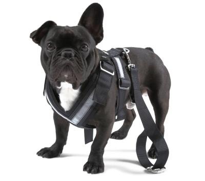 000019409B VAG Ремень безопасности для собаки Skoda Dog Safety Belt